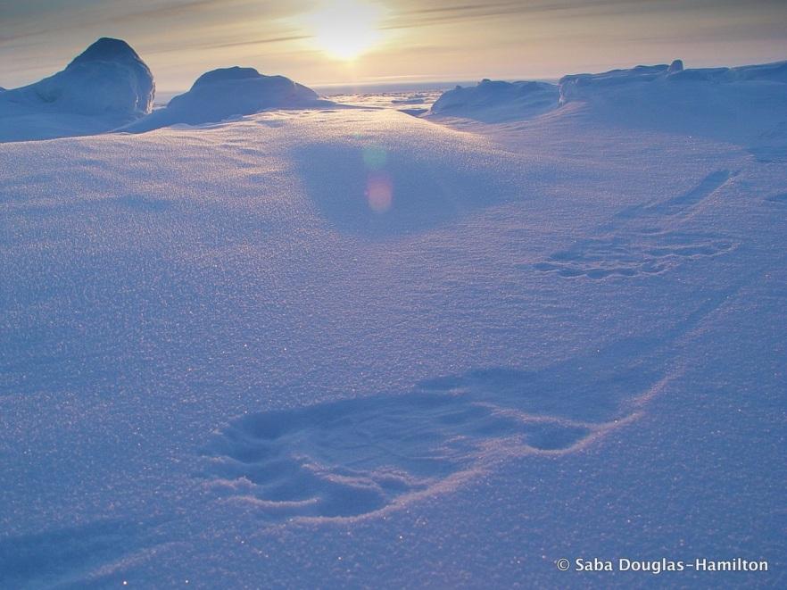 07-Footsteps-v2-1