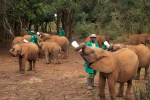 JH_IMG_4405_elephant feeding time at Sheldricks elephant orphanage